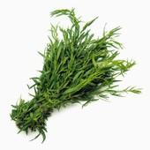 Тархун (Эстрагон) , Hem Zaden, Голландия, 15 семян