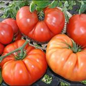 """В лоте два сорта томатов"""" Брутус"""" и ''Хурма '', ароматный, очень сильно напоминают фрукт хурму"""