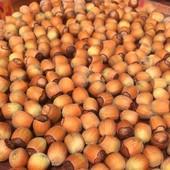 Домашний орех Лещина (фундук) 2019 года! 0,5 кг