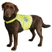 Одежда для собак, питомца