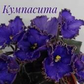 ЕК-Кумпарсита - дітка(фото цвітіння мої)