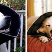 *Защита для собак при травле блох или др.болезнях