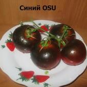 Синий OSU томат очень сладкий