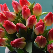 Тюльпан Match. Название сорта переводится как «Спички».В лоте 2 луковицы!!