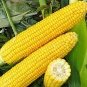 """Кукуруза """" Суперсладкая"""" - Профессиональная большая упаковка 20 г!!! До 2025"""