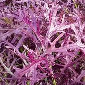 Мизуна красная, японский салат (Hortus, Италия), подходит для балкона
