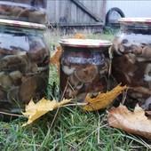 Грибы грибочки опята маринованные