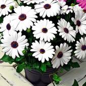 чудо цветок - деморфотека