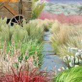 Супер набор декоративных злаковых трав для сада. Сухоцветы!!!