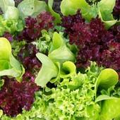 Салат балконный смесь 50+ семян